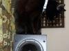doublet-black-cat.jpg